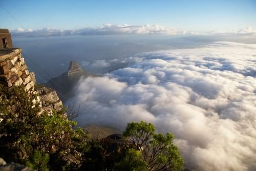 wonders of Table Mountain