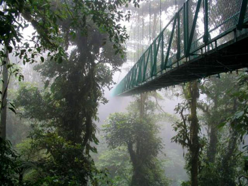 Monteverde Cloud Forest Reserve in Costa Rica