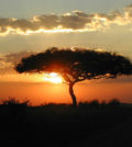 Things You Should Do While In Kenya